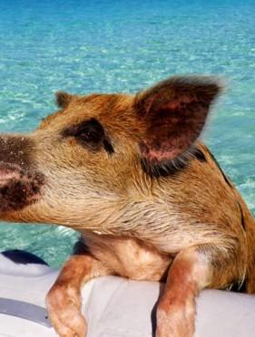 Fabrica de Carne : S-a semnat Declarația pentru Bunăstarea animalelor la nivel european