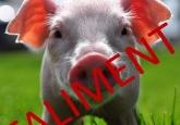 Indiferența autorităților bagă fermele de porcine în faliment